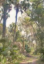 Welaka State Park